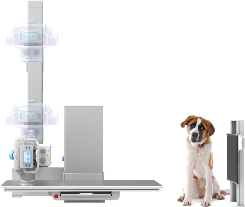 table upright with dog veterinary imaging guelph london ontario